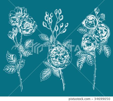 ดอกกุหลาบวาดด้วยปากกาลูกลื่น 34699050