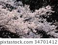 봄의, 꽃, 식물 34701412
