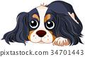 Spaniel Dog 34701443
