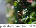 가을 사마귀 34702078