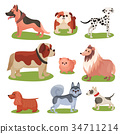 Different breeds of dog set, purebred pets animal 34711214