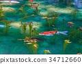池塘 咸水湖 鲤鱼 34712660