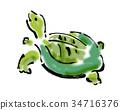 soft-shelled turtle illustration 34716376