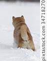 雪和Shiba Inu 34718270