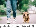 所有者散步与微型达克斯猎犬 34724198
