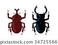 矢量 牙買加犀金龜 鍬形蟲 34725566