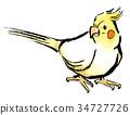 玄凤鹦鹉 鸡尾鹦鹉 凤头鹦鹉 34727726