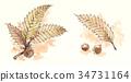 수채화, 고엽, 마른 잎 34731164