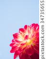 꽃, 플라워, 식물 34735655