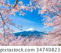 후지산, 벚꽃, 봄 34740823