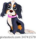 Spaniel Dog 34741579