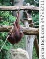 動物園 繩索 動物 34753211