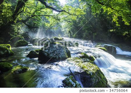 아름다운 신록의 키쿠치 계곡 34756064