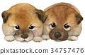 日本狗小狗水彩 34757476