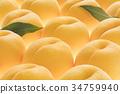黃桃 桃子 水蜜桃 34759940