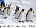 2 월 펭귄 퍼레이드 - 홋카이도의 겨울 - 34761044