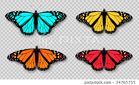 Realistic 3d Monarch butterfly set. Colorful 34765755