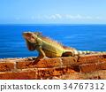 푸에르토 리코 에루모로 요새와 이구아나 34767312
