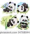 熊貓 熊 卡通 34768044
