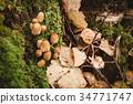 moss, green, background 34771747