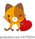 猫 猫咪 小猫 34775034