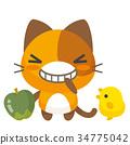 猫 猫咪 小猫 34775042