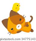 고양이, 삼색털 고양이, 삼색 얼룩고양이 34775143