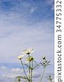 가을, 하늘, 흰색 34775332