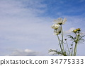 가을, 하늘, 흰색 34775333