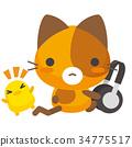 cat, pussy, calico 34775517