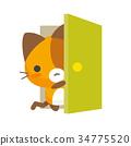 猫 猫咪 小猫 34775520