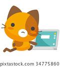 cat,pussy,calico 34775860