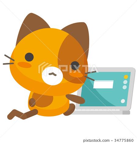 แมว,แมวคาลิโค,พีซี 34775860