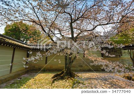 spring sakura pink flower 34777040