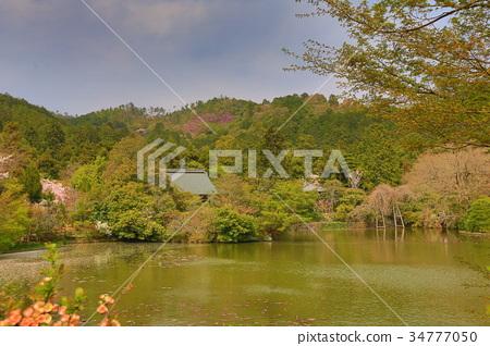 Kyoto, Japan springtime at Ryoanji Temple's pond. 34777050