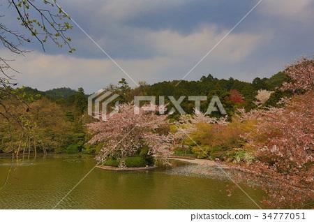 Kyoto, Japan springtime at Ryoanji Temple's pond. 34777051