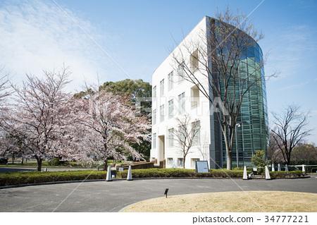 annex, spring, cherry blossom 34777221
