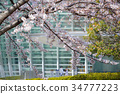 the national art center, spring, cherry blossom 34777223