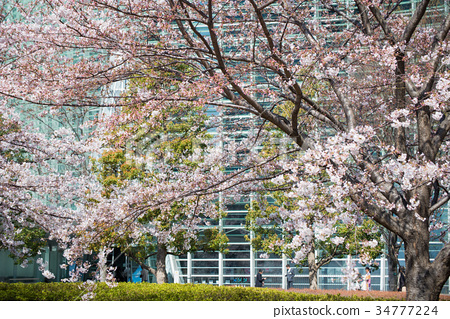 tokyo, minato ward, the national art center 34777224