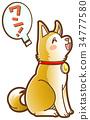 개, 강아지, 착석 34777580