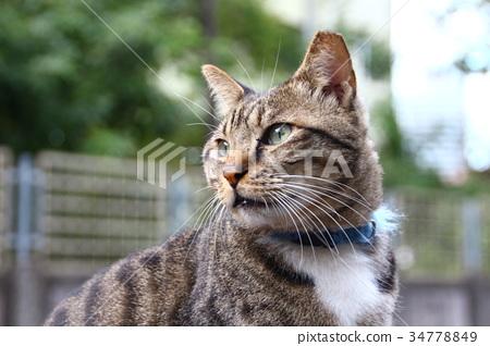 貓 34778849