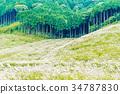ทัศนียภาพ,ภูมิทัศน์,ไม้ 34787830