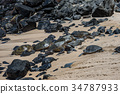 Green sea turtle on the beach 34787933