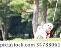 공원에서 개를 산책 34788061