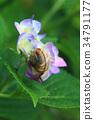 繡球花 花朵 花 34791177