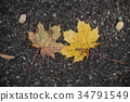 closeup of yellow maple leaves on the road 34791549