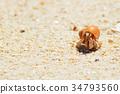 모래사장, 소라게, 동물 34793560