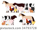 illustration, animal, animals 34793728