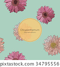 Seamless pattern with chrysanthemum flowers.  34795556