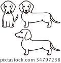 닥스훈트, 개, 강아지 34797238